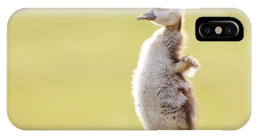 Gosling IPhone X Case featuring the photograph The Happy Chick - Happy Easter by Roeselien Raimond