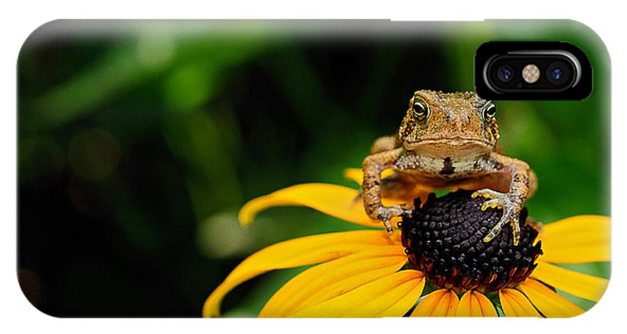 Toad IPhone X Case featuring the photograph The Harbinger by Lois Bryan