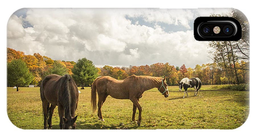 Horses IPhone X Case featuring the photograph The Horses by Lisa Hurylovich