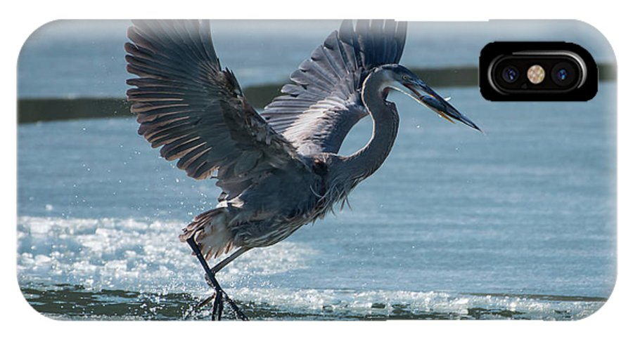 Great Blue Heron IPhone X Case featuring the photograph The Ice Skater by MCM Photography
