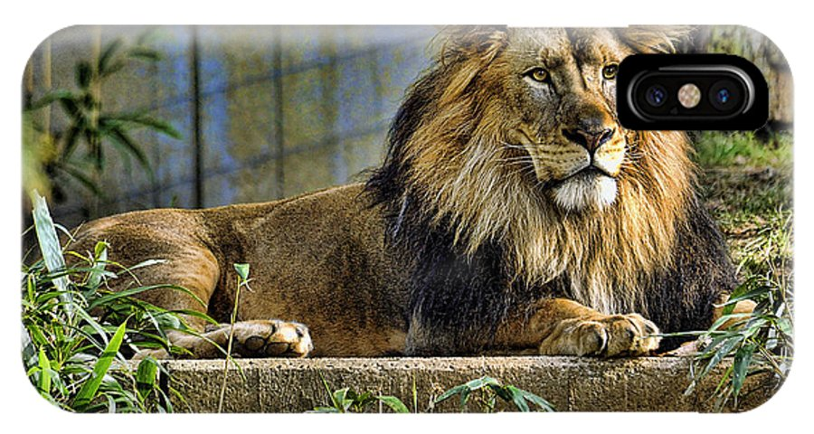 Lion IPhone X Case featuring the photograph The King by Keith Lovejoy