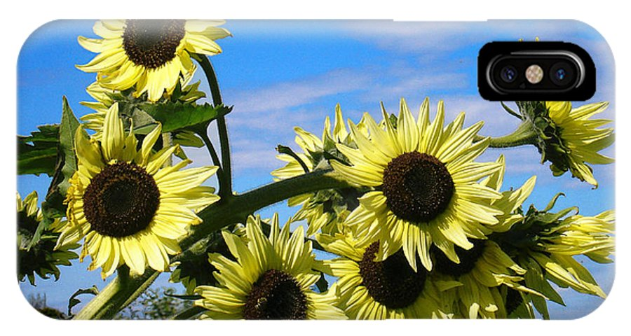 Flowers IPhone X Case featuring the photograph The Last of Summer by Steve Karol