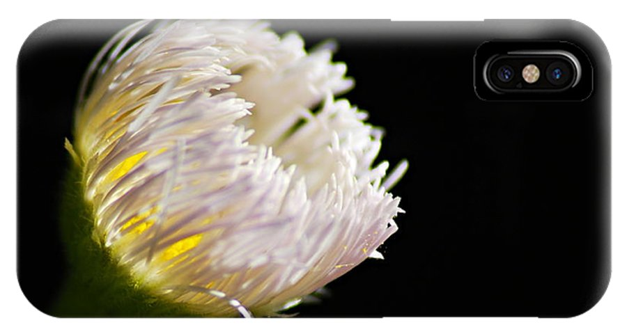 Fleabane IPhone X Case featuring the photograph The Light Within by Larry Ricker