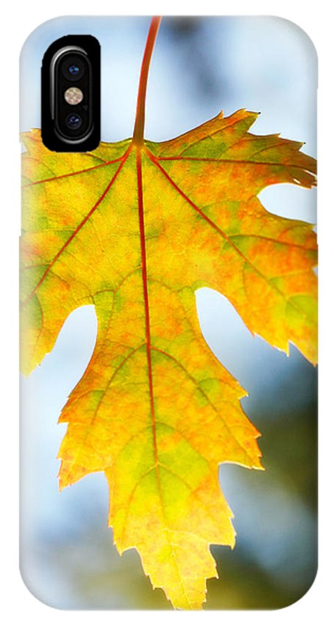 Maple IPhone X Case featuring the photograph The Maple Leaf by Marilyn Hunt