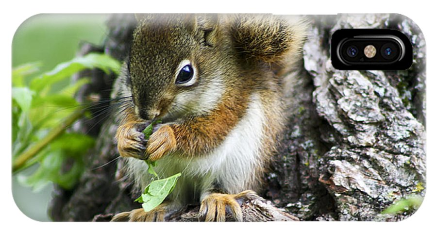 Animal IPhone X Case featuring the photograph The Most Adorable Baby Squirrel by Teresa Zieba