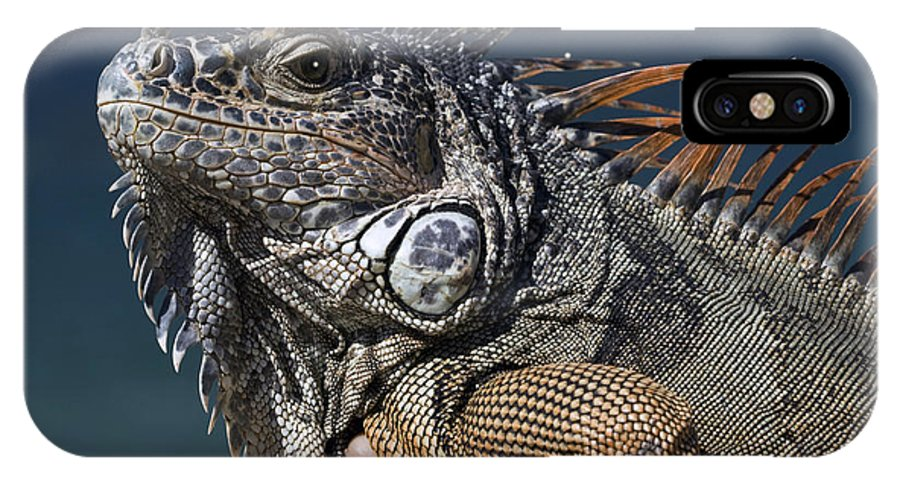 Animal IPhone X Case featuring the photograph The Night Of The Iguana by Carl Purcell