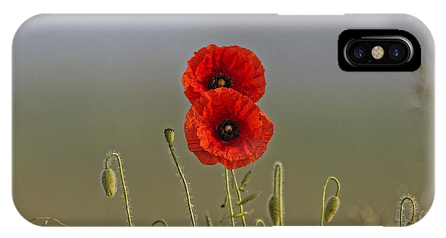 Agriculture IPhone X Case featuring the photograph The Poppy Couple by Adrian Bud