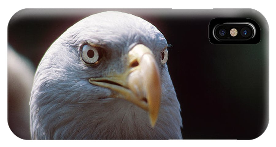 Bald Eagle IPhone X Case featuring the photograph The Price Of Freedom by Carl Purcell