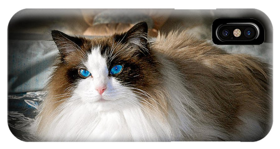 Ragdoll IPhone X Case featuring the photograph The Blue Eyed Princess by Ken Andersen