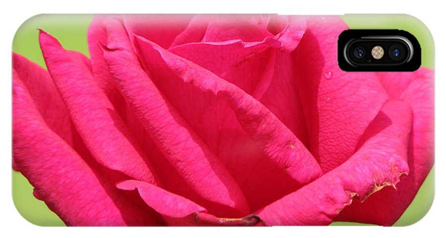 Roses IPhone Case featuring the photograph The Rose by Amanda Barcon
