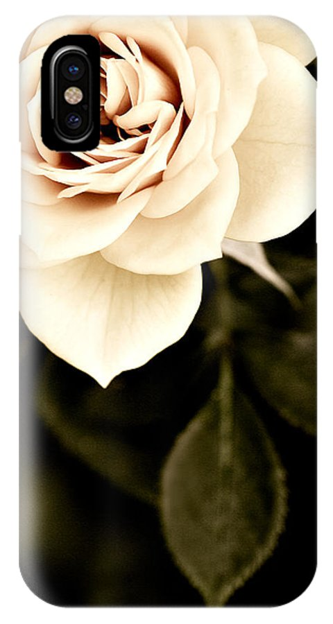 Rose IPhone X Case featuring the photograph The Softest Rose by Marilyn Hunt