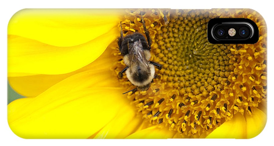 Yellow IPhone X Case featuring the photograph The Sun And The Bee by Sheila McDowell