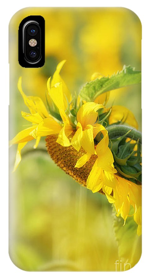 Sunflower IPhone X / XS Case featuring the photograph The Sunflower by Lila Fisher-Wenzel