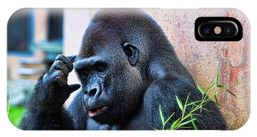 Gorilla IPhone X Case featuring the photograph The Thinking Gorilla by Paul Ward