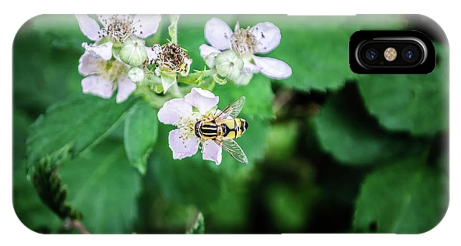 Michelle Meenawong IPhone X / XS Case featuring the photograph The Wasp by Michelle Meenawong