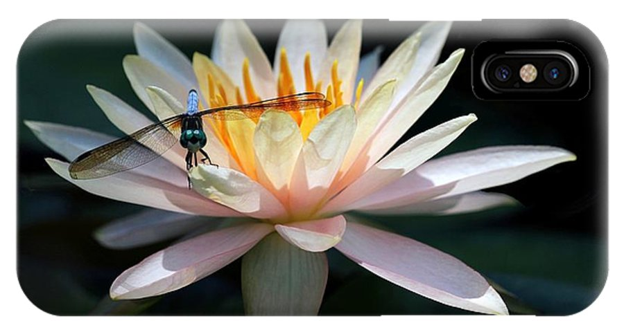 Water Lily IPhone X Case featuring the photograph The Water Lily And The Dragonfly by Sabrina L Ryan