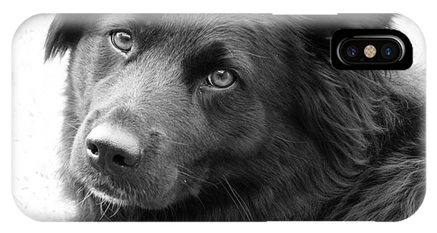 Dog IPhone X Case featuring the photograph Thinking by Amanda Barcon