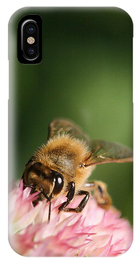 Bee IPhone X Case featuring the photograph Thirsty For Nectar by Angela Rath