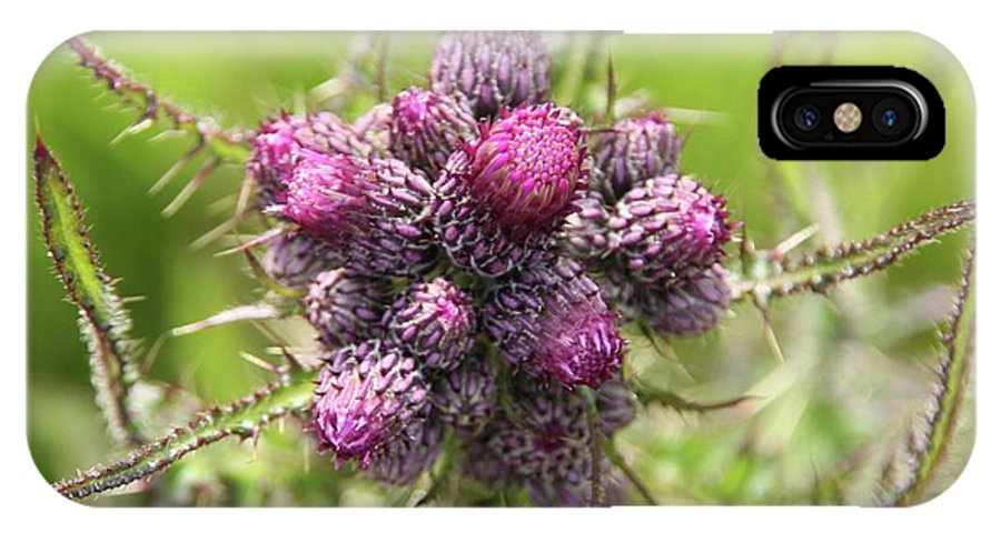 Macro IPhone X Case featuring the photograph Thistle Do 2 by Martina Fagan