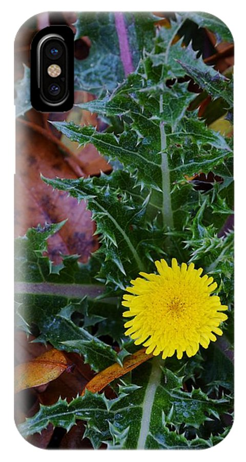 Thistle This IPhone X Case featuring the photograph Thistle This by Warren Thompson