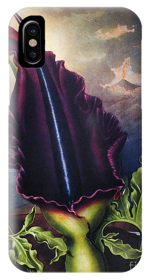 1801 IPhone X Case featuring the photograph Thornton: Dragon Arum by Granger