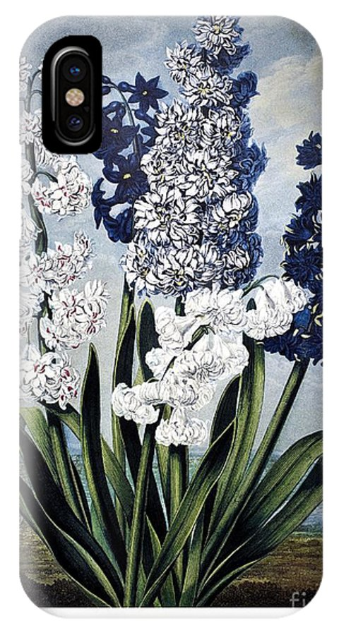 1801 IPhone X Case featuring the photograph Thornton: Hyacinths by Granger