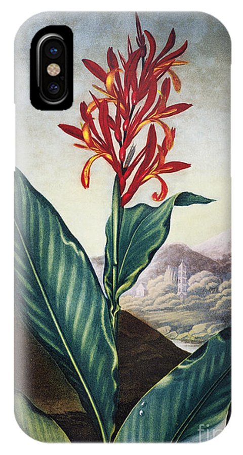 1804 IPhone X Case featuring the photograph Thornton: Indian Reed by Granger