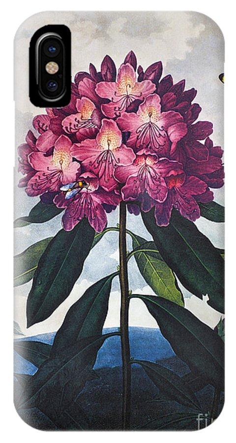 1802 IPhone X Case featuring the photograph Thornton: Rhododendron by Granger