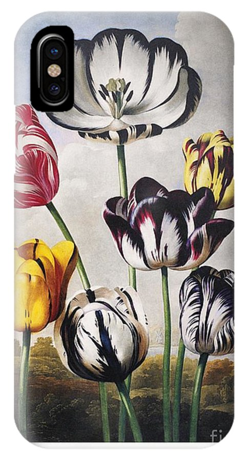 1798 IPhone X Case featuring the photograph Thornton: Tulips by Granger