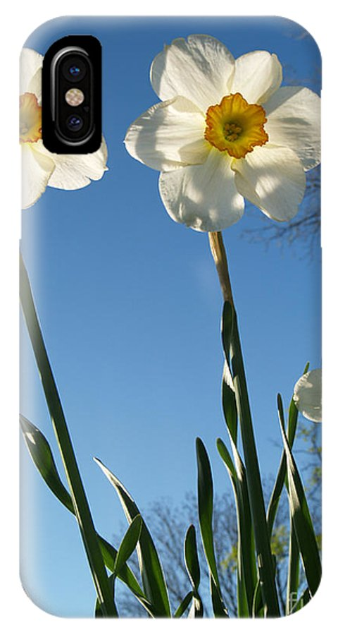 Flower IPhone Case featuring the photograph Three Backlit Jonquils From Below by Anna Lisa Yoder