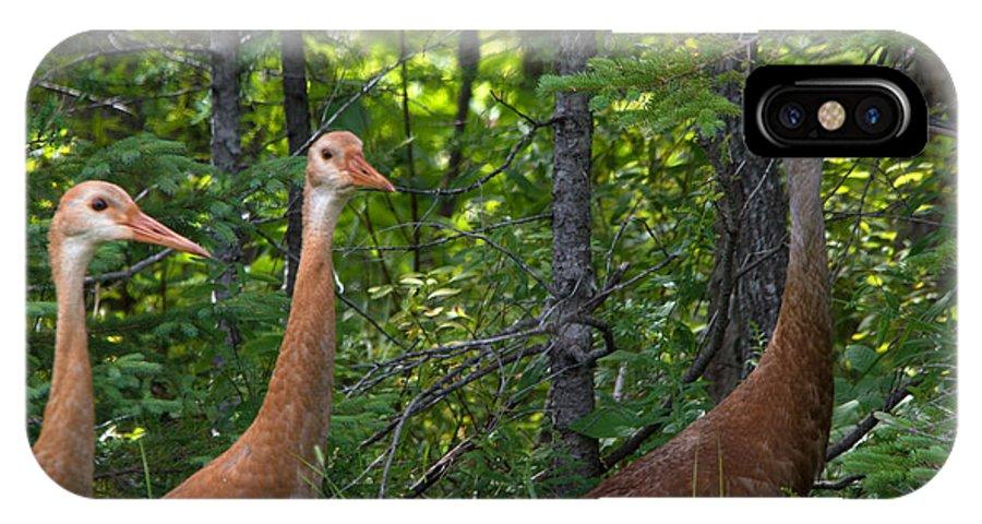 Seney National Wildlife Refuge IPhone X Case featuring the photograph Three On A Walk by Linda Kerkau