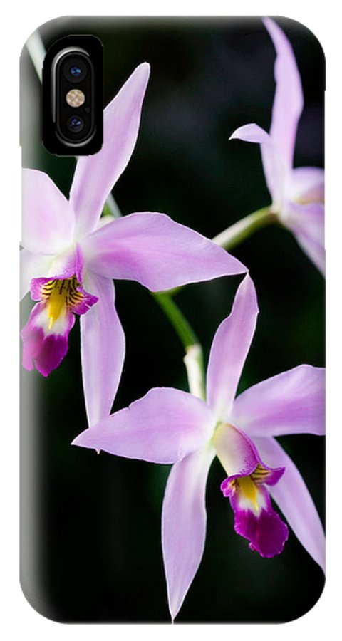 Orchid IPhone X Case featuring the photograph Three Orchids by Marilyn Hunt