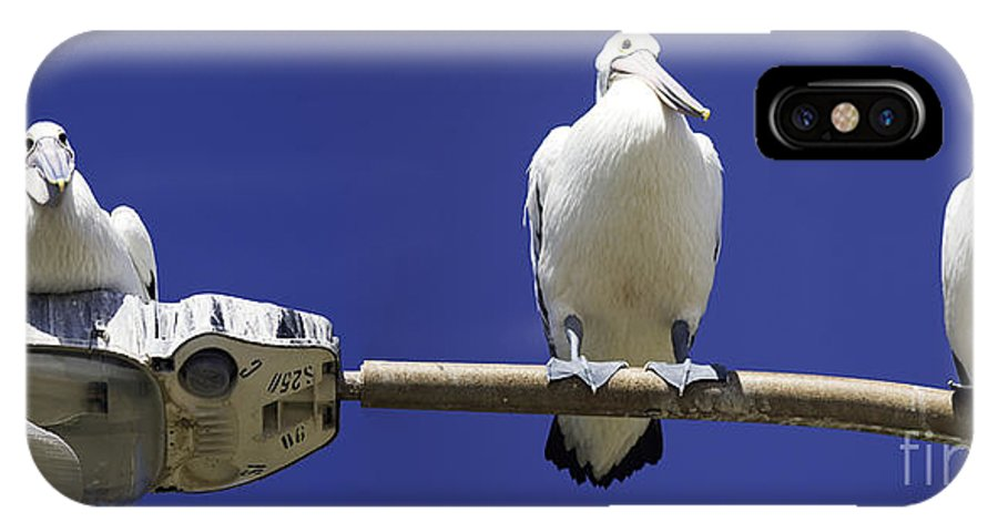 Australian White Pelicans IPhone X Case featuring the photograph Three Pelicans On A Lamp Post by Sheila Smart Fine Art Photography