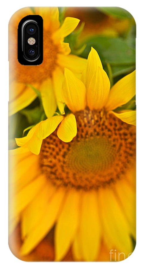 Yellow IPhone X Case featuring the photograph Three Sunflowers by Nadine Rippelmeyer