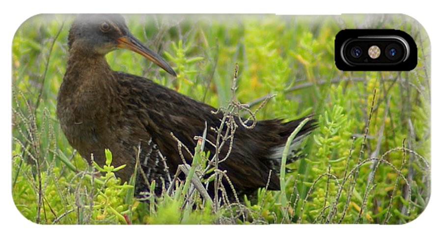 Short Billed Dowitcher IPhone X Case featuring the photograph Tickle My Tail - Photosbydm by Debbie May