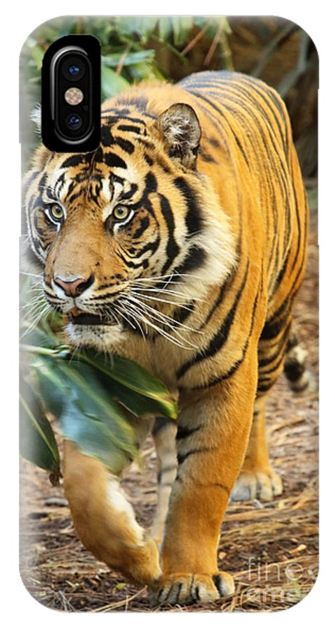Tiger IPhone X Case featuring the photograph Tiger Approaching by Max Allen