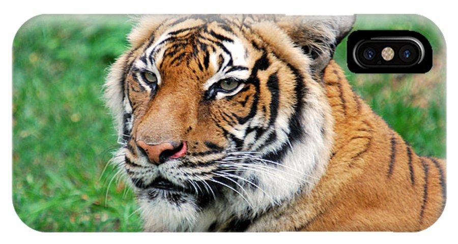 Teresa Blanton IPhone X Case featuring the photograph Tiger Face by Teresa Blanton