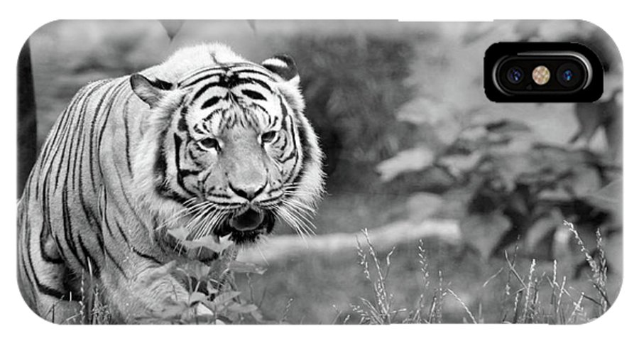 IPhone X Case featuring the photograph Tiger Love by Michelle Stephenson