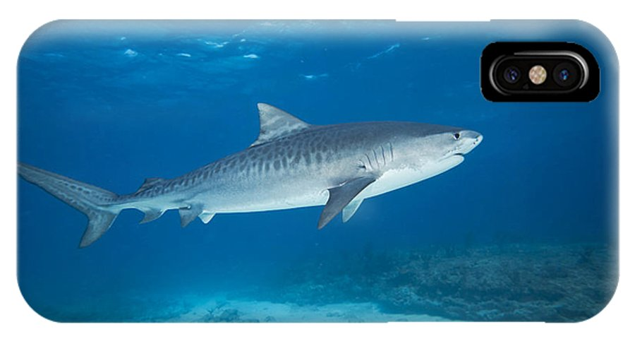 Amazing IPhone X Case featuring the photograph Tiger Shark by Dave Fleetham - Printscapes