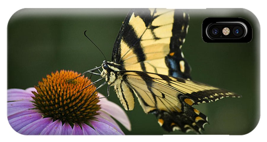 Butterfly IPhone X Case featuring the photograph Tiger Swallowtail 1 by Teresa Mucha