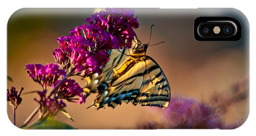 Nature IPhone X Case featuring the photograph Tiger Swallowtail Butterfly by Laura Scott