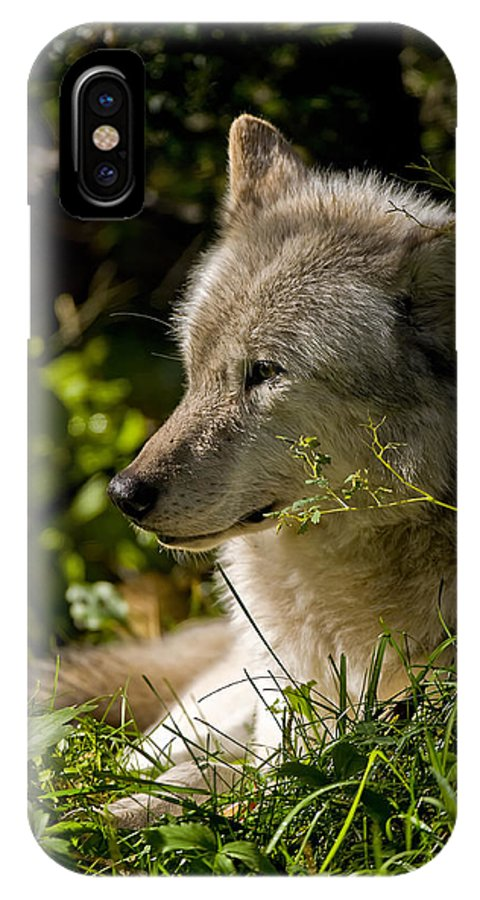 Michael Cummings IPhone X Case featuring the photograph Timber Wolf Portrait by Michael Cummings