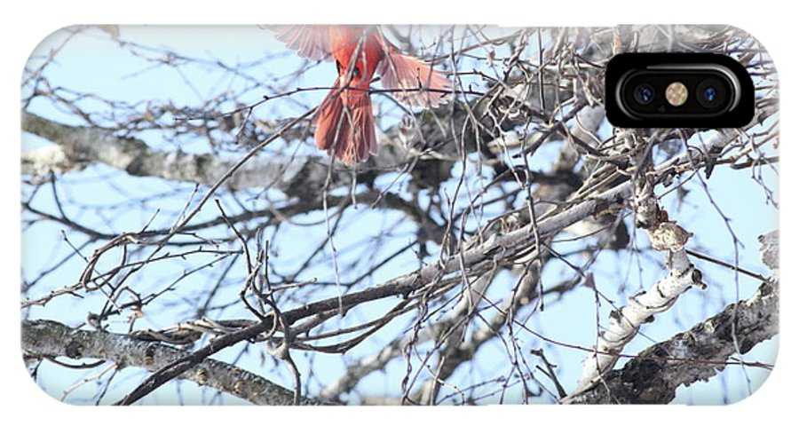 Make Cardinal. Flight. Tree. Blue Sky. Branches. IPhone X Case featuring the photograph Time To Fly by Marty Timmerman