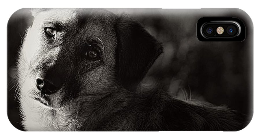 Dog IPhone X / XS Case featuring the photograph Time To Learn by Clare Bevan
