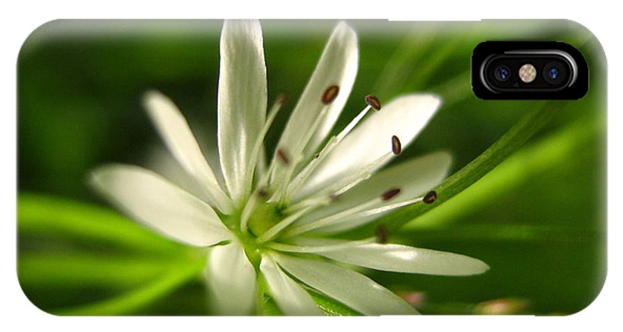 Tiny White Flower IPhone X Case featuring the photograph Tiny White Flower by Melissa Parks