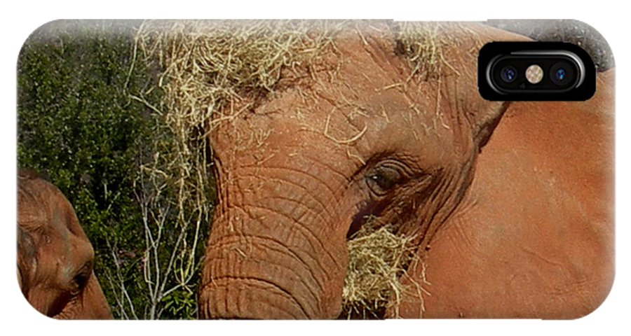 Elephant IPhone X Case featuring the photograph To Go Please by Skip Willits