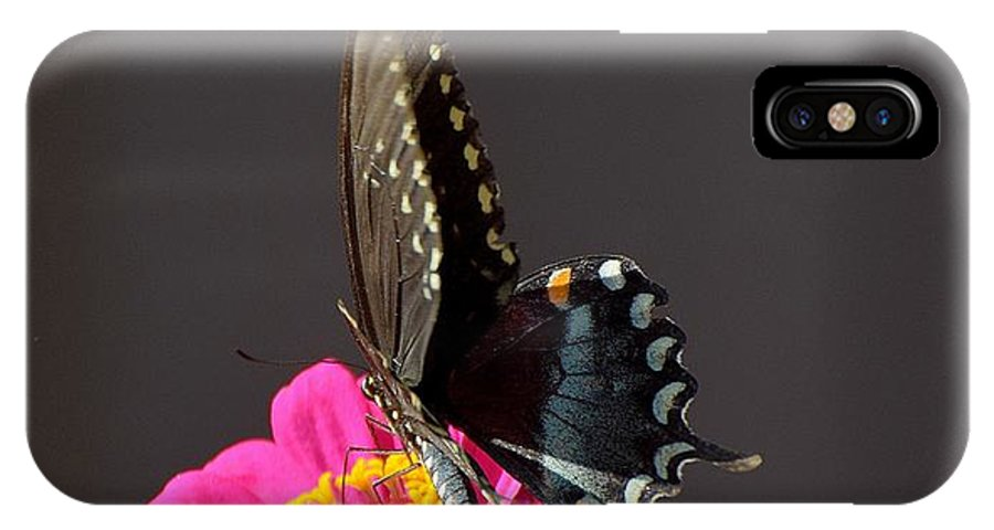 Flowers IPhone X / XS Case featuring the photograph Todays Art 1413 by Lawrence Hess