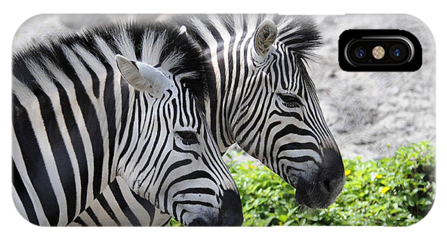 Zebra IPhone X Case featuring the photograph Together by Keith Lovejoy