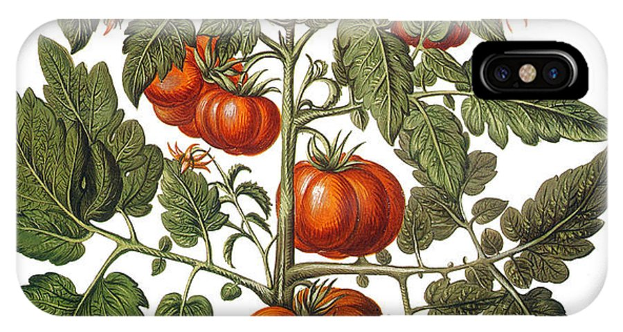 1613 IPhone X Case featuring the photograph Tomato & Watermelon 1613 by Granger