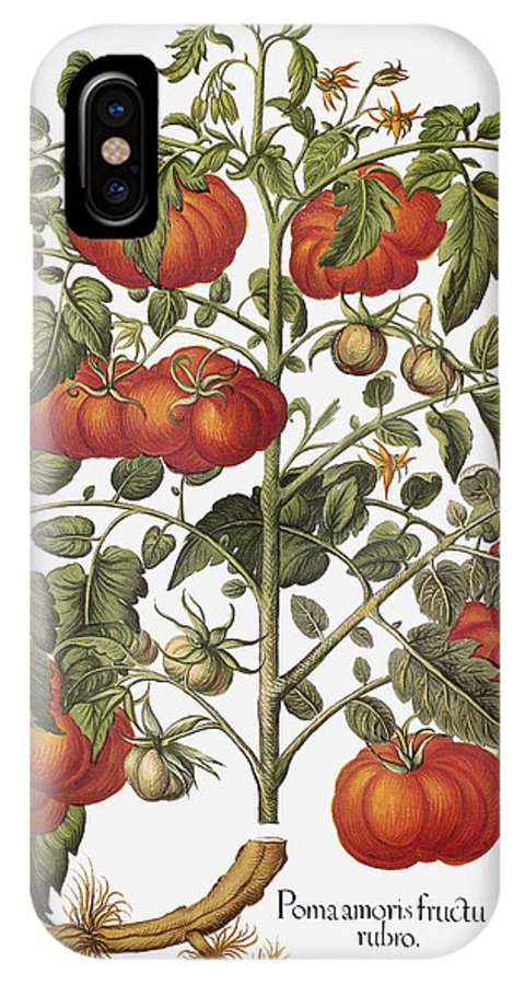 1613 IPhone X Case featuring the photograph Tomato, 1613 by Granger